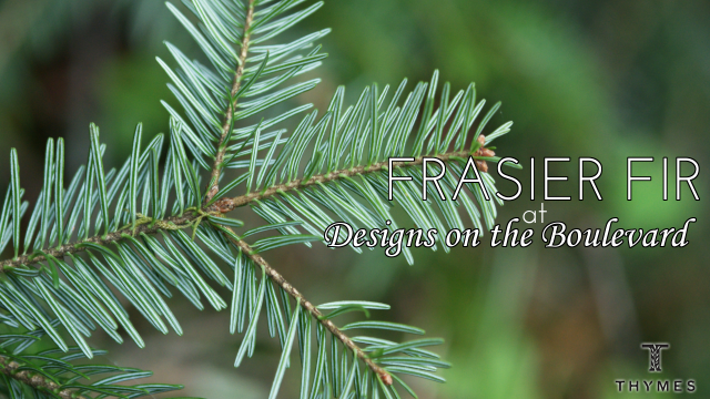 frasier fir at designs